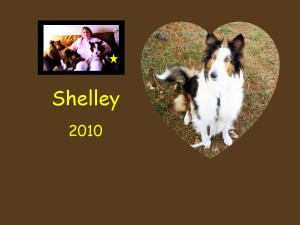 +2010 Shelley