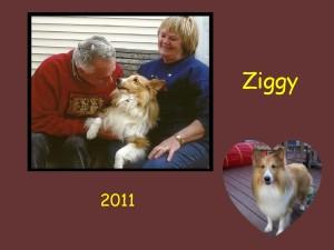 +2011 Ziggy