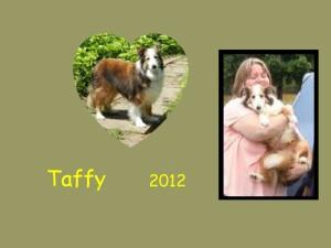 +2012 Taffy