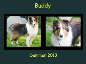 +2013 Buddy