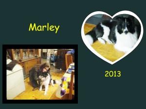 +2013 Marley
