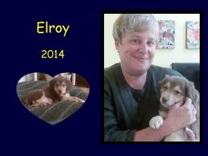 +2014 Elroy puppy
