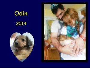 +2014 Odin - Luke - Brute puppy