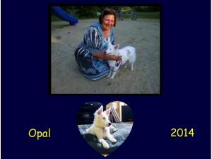 +2014 Opal