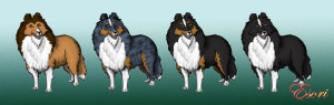 Shetland_Sheepdog_Colors_by_LadyEsori