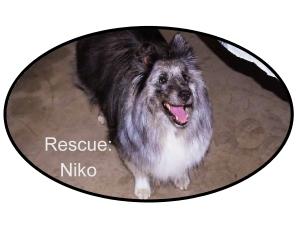 niko xxx