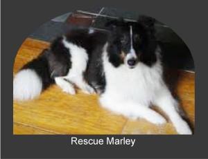 Marley x