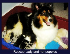 Lady and puppies x