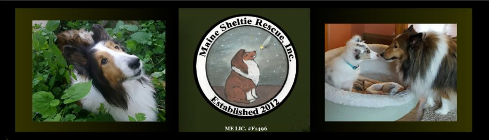 Maine Sheltie Rescue